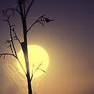 sun1 by anla2011