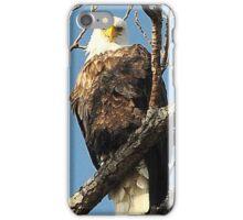 North American Bald Eagle iPhone Case/Skin