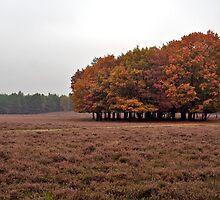 Heath and Leaves. by EZeemering