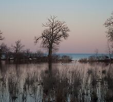 Cranberry Marsh At Dusk  by Gary Chapple