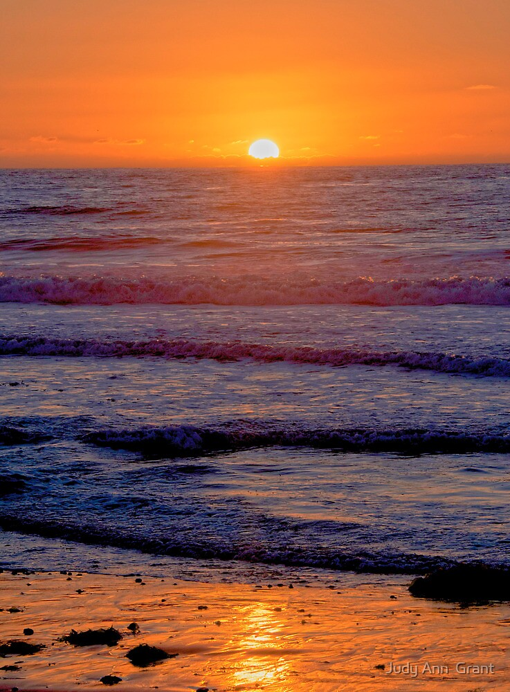 Good Night Carlsbad  by Judy Grant