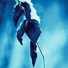 Blue by SylBe