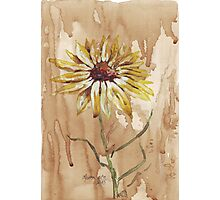 Yellow daisy on a coffee back-ground Photographic Print