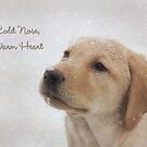 Cold Nose Warm Heart by Lori Deiter