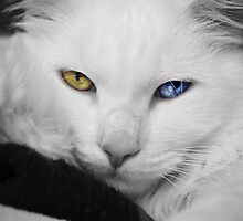 The most beautiful eyes by Scott Mitchell