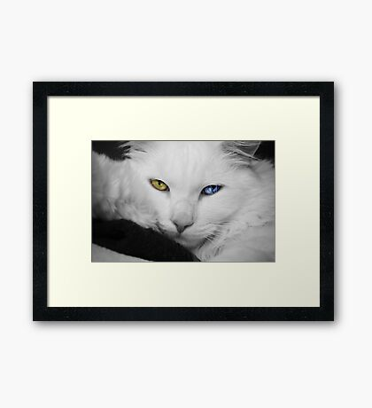 The most beautiful eyes Framed Print