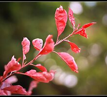 Nature by BreatheAgain