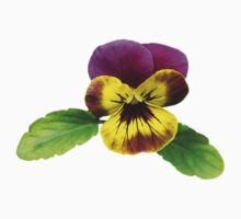 Pansy With Welcoming Arms by Susan Savad