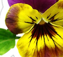 Pansy With Welcoming Arms Sticker
