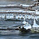 Ice Bells over Rock Creek, Twin Falls, Idaho, USA by Brenda Dahl