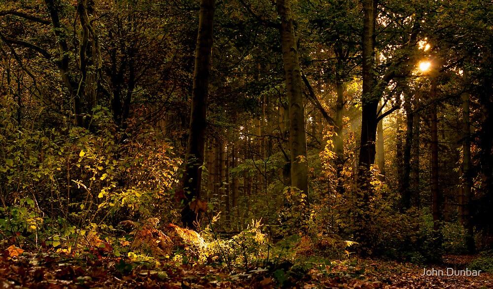 Autumn Woodland by John Dunbar