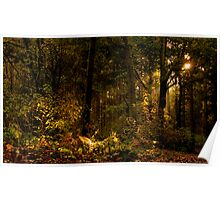 Autumn Woodland Poster