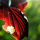 Nature and Beautiful Imperfection by lblight