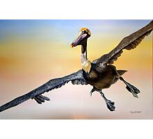 Graceful Landing Photographic Print