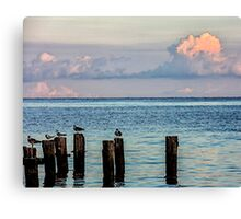Seagulls On Pilings Poster Print And Card Canvas Print