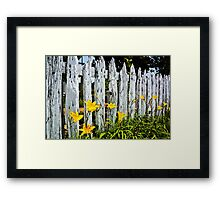 Wood Fence And Daffodils Poster Print And Card Framed Print