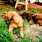 Gotta Love Puppies by SunriseBirds