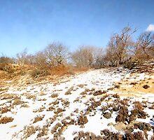 Parker River Wildlife Sanctuary by john forrant