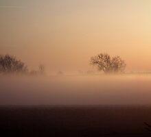 Low Level Morning Fog by Deb Fedeler