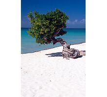 Lone Tree on a Beach Photographic Print