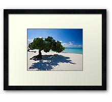 Eagle Beach Divi Tree Framed Print