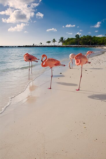 Flamingos on a Beach by George Oze