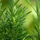 rosemary...and remembrance. by aspectsoftmk