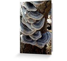 Multiple Shelf-like Fungi - Shades of Gray Greeting Card