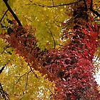 Red-leafed Climbing Plant by Deb Fedeler