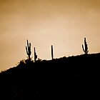 Arizona Cactus by ADayToRemember