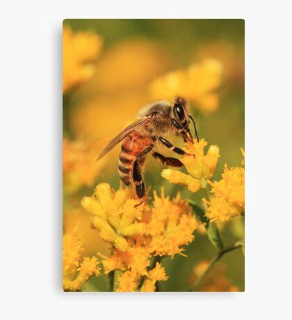 Honeybee On Goldenrod ~ Canvas Print
