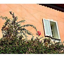 Bougainvillea On Cap Ferrat Photographic Print