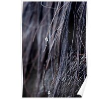 Drops of equine Poster