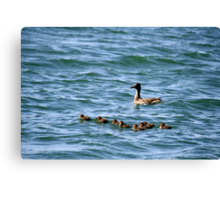 Mama and ducklings,Sparks Nevada USA Canvas Print
