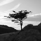 Tree in Peak District by Pawel J