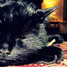 Black Cat Sleeping by KnightsOfShame