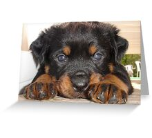 Female Rottweiler Puppy, Head Resting Between Paws Greeting Card