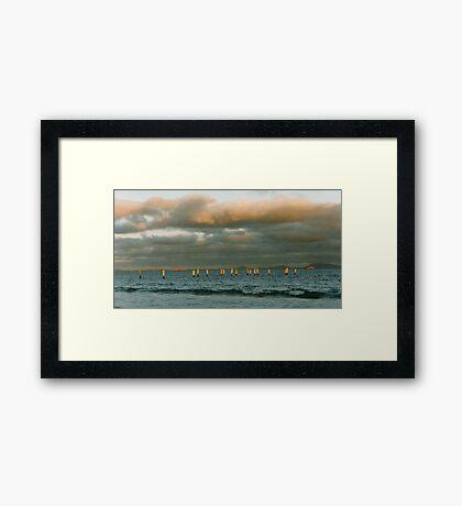 Golden rods Framed Print