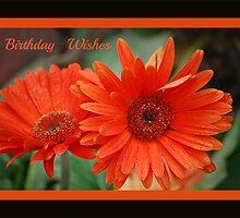 A Birthday Wish For jeanlphotos... by zpawpaw