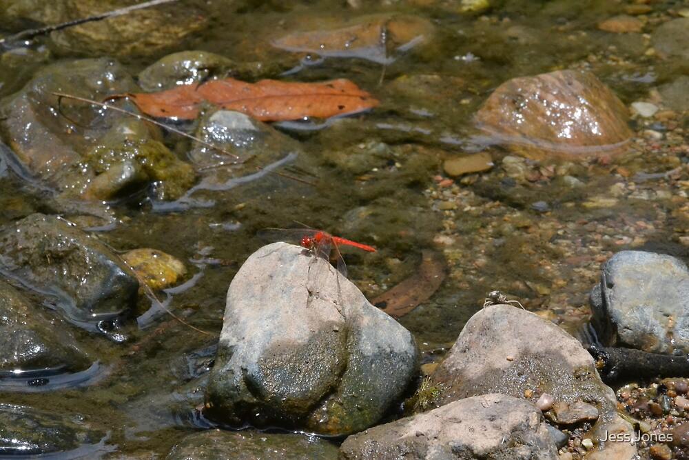 Dragonfly Resting by Jess Jones