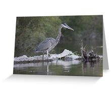 Great Blue Heron on Milwaukee River Greeting Card