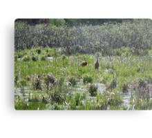 Sandhill Crane Habitat Metal Print