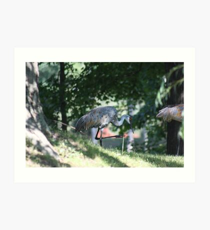Sandhill Crane photographed in Oconomowoc Art Print