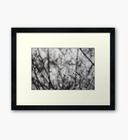 Sandhill Cranes in Whitefish Bay Wisconsin Framed Print