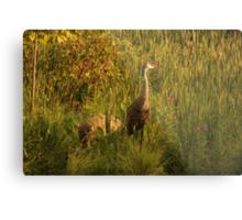 Sandhill Cranes on shore of Lake Metal Print