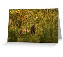 Sandhill Cranes on shore of Lake Greeting Card