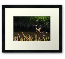 Sandhill Cranes Wading Framed Print