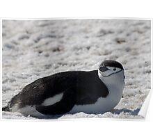 Penguin 014 Poster