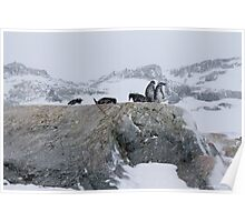 Penguin 020 Poster