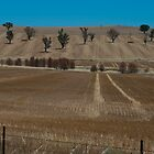 NARRANDERA by gus72